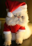 Babbo Natale gatto.jpg